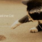 ネズミの相談 ~ 誰が鈴をつけるか